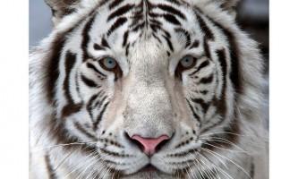 Стало відомо які тварини вимруть до кінця століття