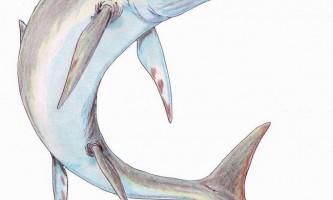 Стеноптерігій або рибоящери - хто це?