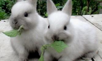Чи варто заводити кроликів? Лікнеп з кролівництва