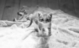 Таблетки від глистів для кішок