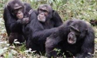Таїландські мавпи влаштували повний гештальт туристці з фобією