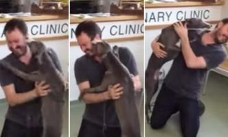 Вкрадена собака радіє зустрічі з господарем