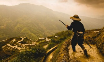 Там, де росте рис