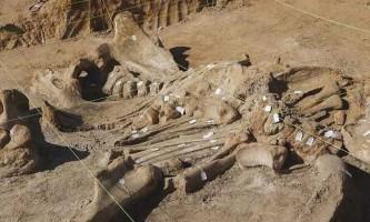 Американець розкопав у себе на фермі скелет мамонта