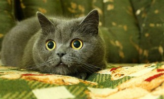 Типові помилки власників кішок