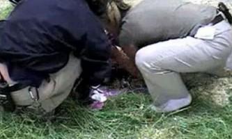 Тільки штучне дихання врятувало життя дитинчаті тапира