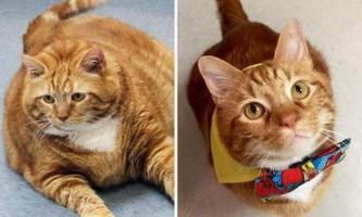 Товстий кіт з техасу схуд на 10 кілограмів