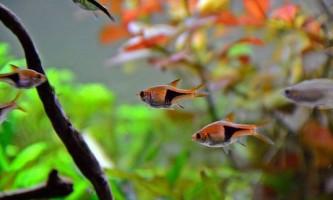 Топ 10 рибок для початківців