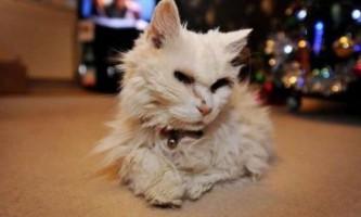 Топ-3 найстаріших котів у світі - блекі, крім пафф і люси