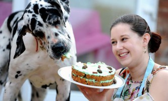 Торти на замовлення для собак та інших тварин