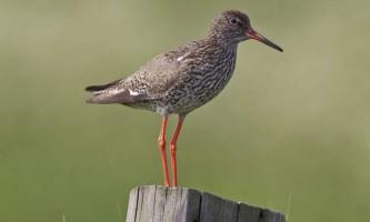 Травник - птах, зовсім причетна до траволікування