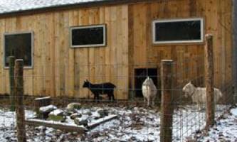 Вимоги до сараю для кіз, його будівництво своїми руками