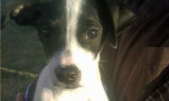 Тримісячний щеня повернувся до життя після усипляння