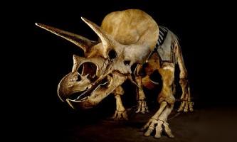 Тріцератопси і торозавра представляють собою різні стадії росту одного динозавра