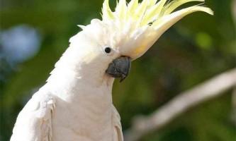 Тритон - не рептилія, а папуга