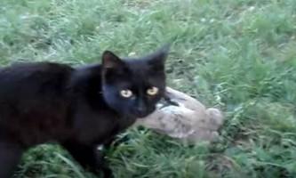 Зворушливі історії відданого кохання кішок
