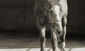 Зворушливі портрети людей похилого віку тварин