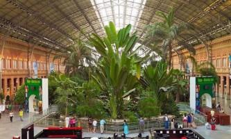 Тропічний сад вокзалу аточа в мадриді