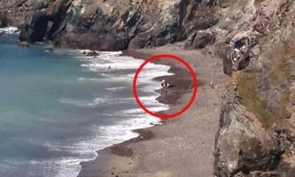 Турист намагався врятувати дельфіна, який опинився акулою