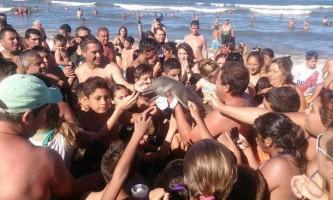 Туристи вбили маленького дельфіна заради селфі