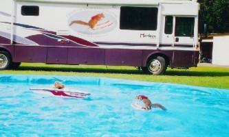 Твіггі - білка, яка вміє кататися на водних лижах