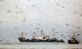 Біля берегів примор`я виявлені найбільші за 20 років скупчення риб