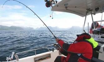 Біля берегів північної норвегії зловили атлантичного палтуса вагою 241 кілограм
