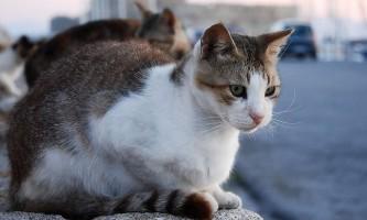 У кішки тічка