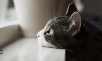 У кота чорні точки на підборідді - як лікувати?