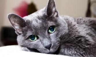 У кота лізе шерсть: що робити?
