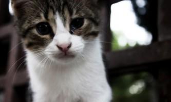 У кота сльозяться очей: що робити?