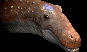 У найбільших травоїдних динозаврів мозок був розміром з тенісний м`яч