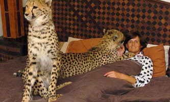 У мене вдома 11 котів. З них 4 гепарда, 5 левів і 2 тигра