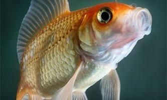 У риб придбання рефлексів пов`язано з роботою мозочка