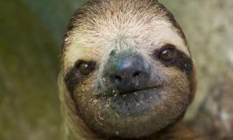 Притулок для лінивців в коста-ріка