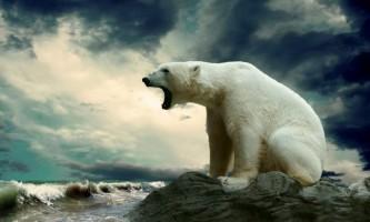 Вчені: білі ведмеді не вимруть, їх врятують білі гуси і олені