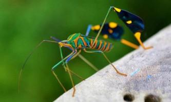 Вчені: джерелом омега-3 жирних кислот можуть стати комахи