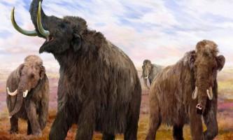 Вчені з росії хочуть клонувати мамонта