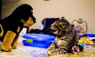 Вчені виміряли любов собак і кішок до людей