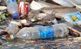 Вчені: до 2050 року всі птахи будуть «просякнуті» пластиком