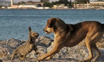 Вчені: багато видів стародавніх собак вимерли через кішок