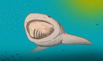 Вчені знайшли доісторичну акулу з гігантською пащею