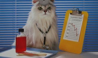 Вчені знайшли підтвердження того, що кішки здатні лікувати людей
