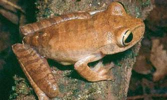 Вчені назвали 15 видів тварин з найнижчими шансами на виживання