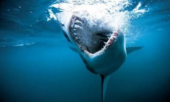 Вчені пояснили причини нападу акул на людей