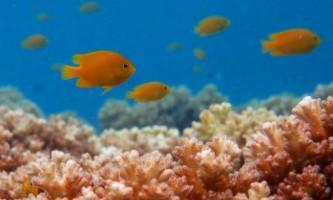 Вчені: виявлені рибки, які плачуть, щоб врятуватися від хижаків