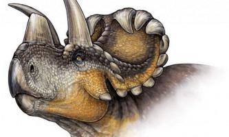Вчені виявили новий вид динозавра - вендіцератопс