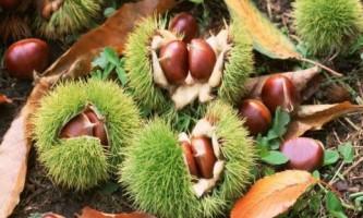 Вчені відкрили цілющі властивості горіхів пекан