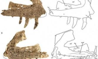 Вчені відкрили новий вид древніх рептилій