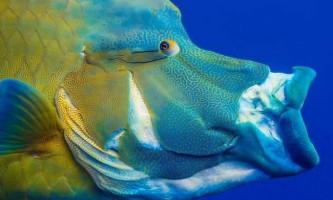 Вчені відстежили еволюцію висувною щелепи у риб